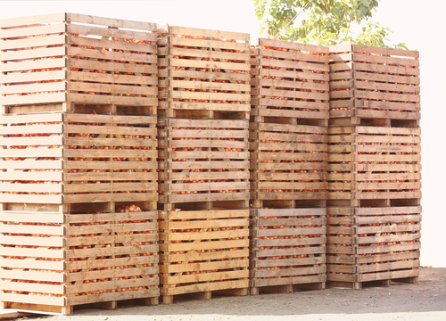wooden crates harvested onion