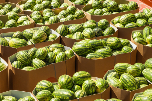 ripe watermelons packed in boxes